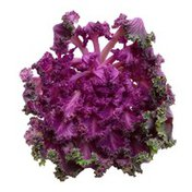 Organic Purple Kale Bunch