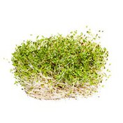 Organic Alfalfa Sprouts Package