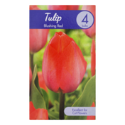 Garden State Bulb Company Tulip Blushing Red