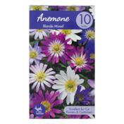 Garden State Bulb Company Anemone Blanda Mixed