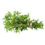 Infinite Herbs Organic Marjoram
