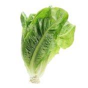 Organic Romaine Lettuce Bag