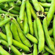Fava Beans Box