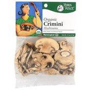 Terra Dolce Organic Crimini Mushrooms