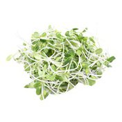 Organic Sunflower Sprouts Bag