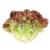 Earthbound Farm USA Red Organic Leaf