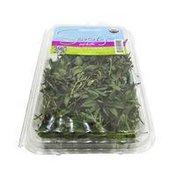 Organic Savory Infinite Herbs & Specialties