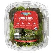 Superior Fresh Organic Power Greens