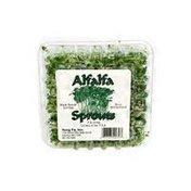 Yong Fa Alfalfa Sprouts