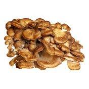 Hen of the Wood Mushrooms
