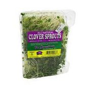 Sproutman Organic Clover Sprouts