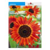 Burpee Sunflower Velvet Queen