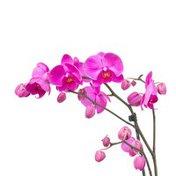 "5"" Pink Orchid Diamond Gemstone"