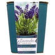 Garden State Bulb Company Garden State Bulb Grow Kit, Aromatic Herbs, Lavender, Sleeve