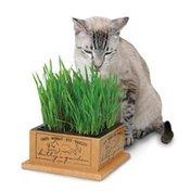 Pioneer Pet Pet Smart Cat Kitty's Garden Refill Kit