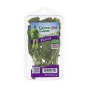 Green Giant Fresh Basil