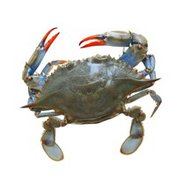 Previously Frozen Whole Softshell Blue Crab