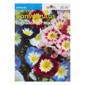 SB Convolvulus Seeds