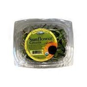 Organic Sunflower Greens