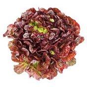 Organic Red Butterhead (Boston, Butter, Bibb) Lettuce