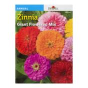 Burpee Zinnia Giant Flowered Mix