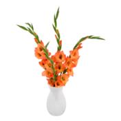 Premium Gladiolus