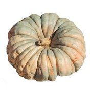 Organic Jarrahdale Pumpkin