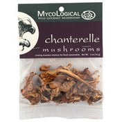 MycoLogical Chanterelle Mushrooms