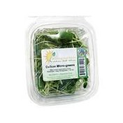 Morning Sun Farms Daikon Radish Micro-Greens