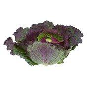 Organic Red Savoy Cabbage