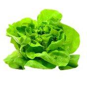 Organic Butterhead (Boston, Butter, Bibb) Lettuce