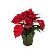 "4"" Red Poinsettia"