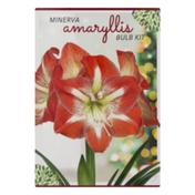 Garden State Bulb Company Minerva Amaryllis Bulb Kit
