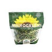 New Day Farms Organic Sunflower Microgreens
