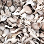 Oyster Mushroom Package