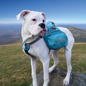 Kurgo Coastal Blue Baxter Backpack