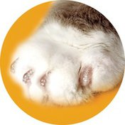 Soft Claws Medium Clear Nail Caps and Adhesive For Cats