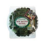 Hydroponic Red Butter Lettuce