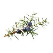 Juniper Berries Package