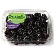 Driscoll's Organic Blackberries