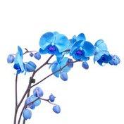 Blue & Aqua Assorted Orchid Gemstone