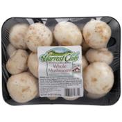 Harvest Club Whole Mushrooms