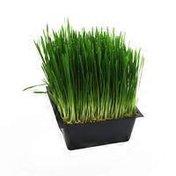 Grown By Green Organic Wheatgrass