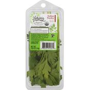 Nature's Promise Italian Parsley, Organic
