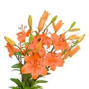 5 Stem Orange Lilies