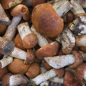 Cep Mushroom