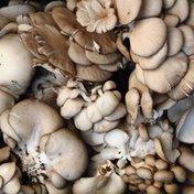 Organic Oyster Mushroom Package