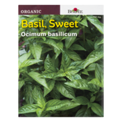Burpee Basil, Sweet Ocimum Basilicum