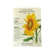 Botanical Interests Sunflower Mammoth Grey Stripe