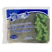 Rio Grande Plantain Leaves